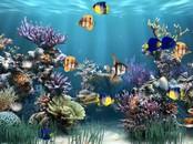 Screensaver Maker: Aquarium 1.0.0